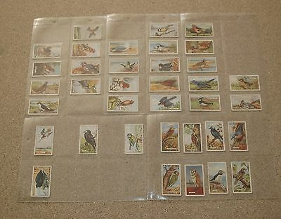 Gallaher Ltd British Birds Cigarette Cards