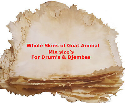 Lot of 10-Pieces Full Animal Natural Goat Skins for Drum / Djembes / Bodhrans.