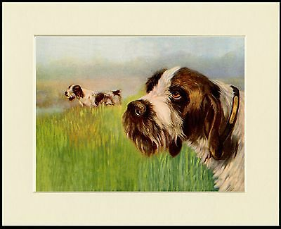 Italian Spinone Dogs At Work Lovely Dog Print Mounted Ready To Frame