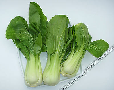 Chinese Cabbage Pak-Choi Organic Heirloom Vegetable Seed Rare 300 Seeds