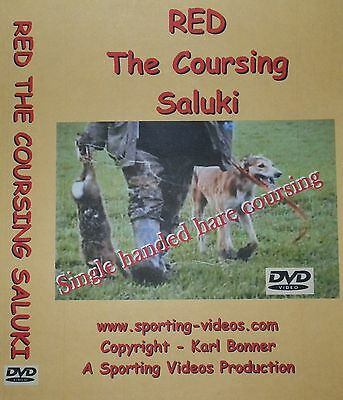 RED THE COURSING SALUKI DVD -  hares, fens