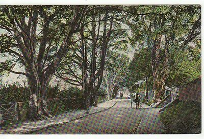 Avenue To The Old Park, ROTHESAY, Isle Of Bute