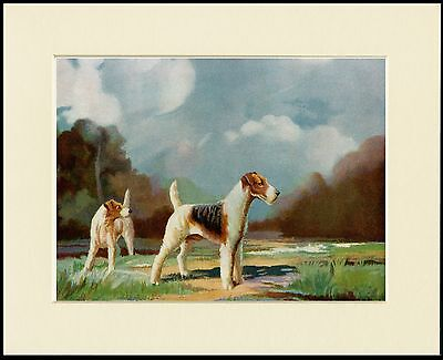 Wire Fox Terrier Two Dogs Lovely Dog Print Mounted Ready To Frame
