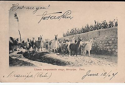 Peru  1907 Cover With Llamas In Arequipa