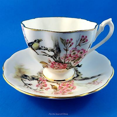 Striking Birds on a Cherry Blossom Tree Queen Anne Tea Cup and Saucer Set