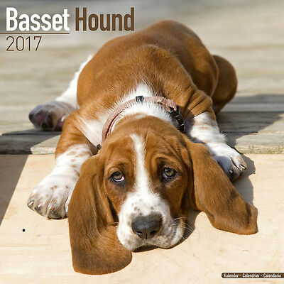 "Basset Hound 2017 Wall Calendar by Avonside (12"" x 24"" when opened)"