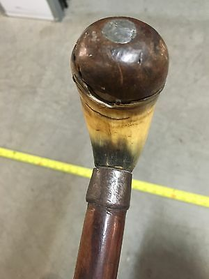 HICKORY shaft walking stick cane Weighted Cow Horn handle collar Vintage Antique