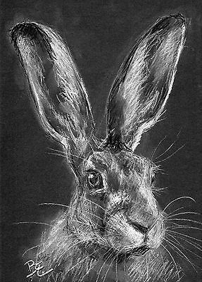 ORIGINAL A4 Wildlife PastelSketch of a HARE Animal Drawing by Belinda Elliott