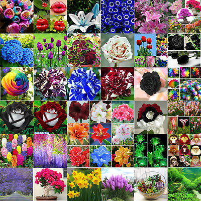30pcs Colorful Rare Dragon Rose Flower Seeds Garden Plants Seeds Flower Seeds
