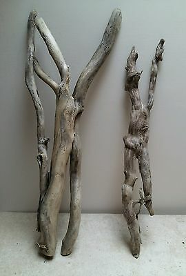 Root driftwood 2 pieces