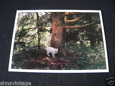 Unusual Weird Postcard Cloud Liberty New York Cat in woods by tree