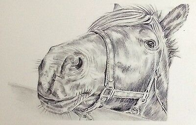 Horse head over fence print, wildlife, pencil drawing/sketch
