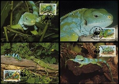 Tonga WWF Banded Iguana 4 official Maxicards