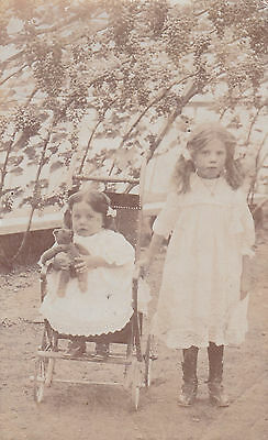 Guernsey  - Rp Postcard - Interior Of A Vine House - Young Girls - Unposted