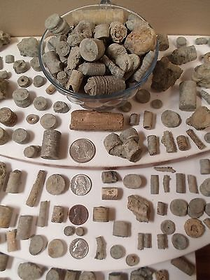 Crinoid 1LB KIDS EXPLORE Rock Fossil HOME DECOR Discover DIY JEWELRY PROJECT