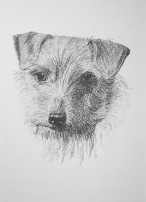 1935 NORWICH TERRIER DOG Vintage mounted  Wardle bookplate Christmas gift  PRINT