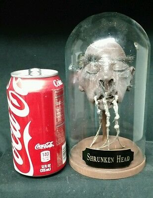 Rare Shrunken Head Collectible ,mummified,obscure,wunderkammer,sideshow Gaff,odd