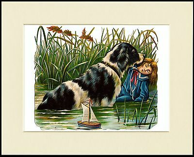 Newfoundland Saving Drowning Boy Old Style Dog Print Mounted Ready To Frame