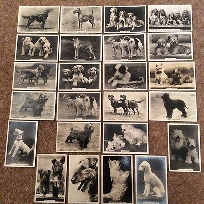 Senior Service Cigarette Cards Dogs 29 Of 48 With 5 Duplicates