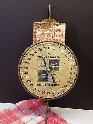 Vintage PURINA BRAND FEED Cow Culler Farm Advertising Milk Scale