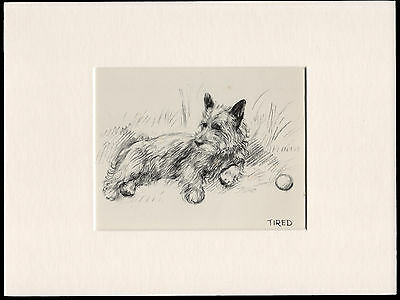 Cairn Terrier With A Ball Old 1930's Bookplate Dog Art Print Ready Mounted
