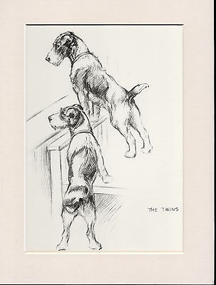 Wire Fox Terrier Dogs Old 1930's Ready Mounted K F Barker Dog Art Print