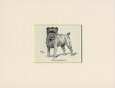 BRUSSELS GRIFFON ANTIQUE 1912 LITTLE DOG PRINT by WARDLE MOUNTED READY TO FRAME