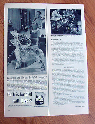 1953 Dash Dog Food Ad Champion Prune's Own Yukon English Setter