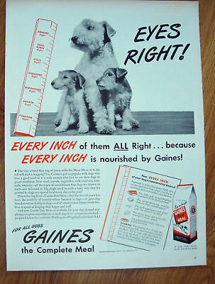 1944 Gaines Dog Food Ad Schnauzer Yorkshire Terrier Dogs?
