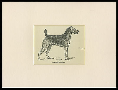 AIREDALE TERRIER OLD ANTIQUE 1912 DOG PRINT by ARTHUR WARDLE READY MOUNTED