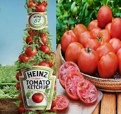 Heinz Tomato Seeds-  Comb. S/H See our store