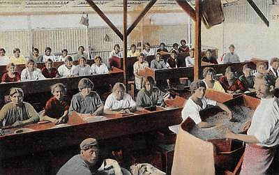 SANCHEZ, COSTA RICA ~ ROOM FULL OF WORKERS CLASSIFYING COFFEE ~ c. 1904-14