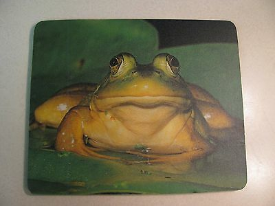 Frog On Lily Pad Mousepad  *new*