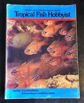Tropical Fish Hobbyist Magazine 148pages Jan'90 Cardinal Fishes Gecko Angel Pike