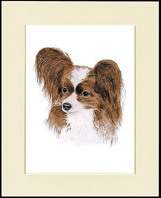 Papillon Lovely Head Study Dog Print Mounted Ready To Frame