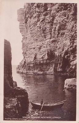 RP NOSS  CLIFFS SEA BIRDS NESTING  SHETLAND SCOTTISH ISLES RATTAR R PHOTO c1934