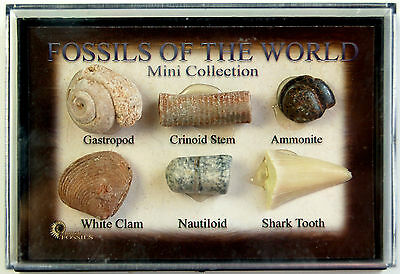 Mini Collection of Fossils of The World