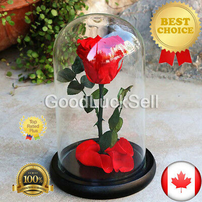 Beauty and the Beast Enchanted Red Rose Fairy Tale Belle Glass Prop Decor Gift