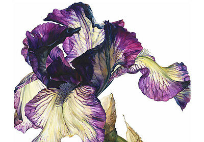 Iris Purple Flower Painting Nature Fine Canvas Print