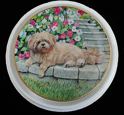 Danbury Mint Lhasa Apso ~ Lounging Lhasa ~ Collector Plate...limited Edition