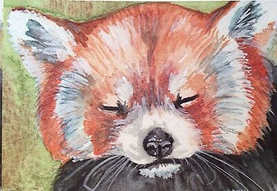 ACEO Red Panda Content Limited Edition Print Watercolor Painting Art HalieFrench