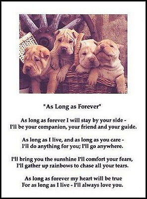 """Beautiful SHAR-PEI print """"AS LONG AS FOREVER.."""" art poem dog puppy NEW!"""
