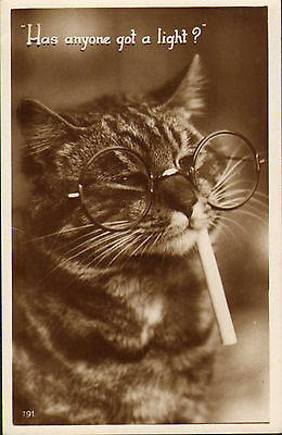 cat postcard .has anyone got a light ! real photo 1936