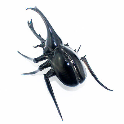 5.6 inches Besouro Hercule Beetle Figurine hand made Blown Glass Crystal / R6121