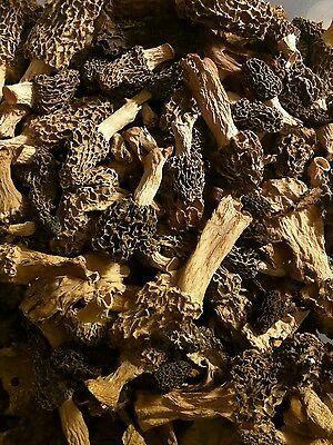 1 OZ Dried Morel Mushrooms Freshly Wild Harvested from Wisconsin 2016
