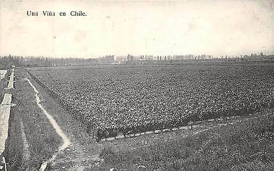CHILE ~ VINEYARD OVERVIEW - NO SPECIFIC LOCATION, HUME PUB ~ c. 1904-14