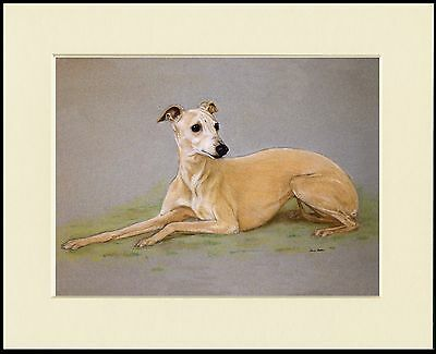 Whippet At Rest Lovely Dog Print Mounted Ready To Frame