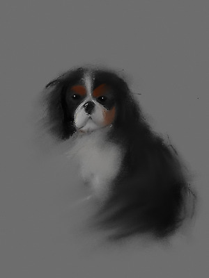 Cavalier King Charles Spaniel Picture print Large 28.6cm x 43.9cm