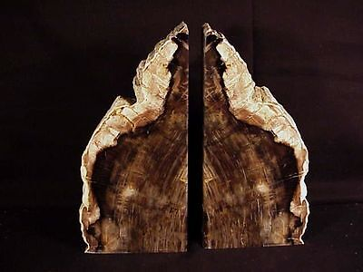 """~Rw~ Saddle Mountain  """"petrified Wood Bookends""""  ~~ Magnificent"""