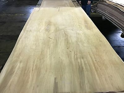 "Wood Veneer White Birch 48x98 1pcs total 10Mil Paper Backed  ""EXOTIC"" GMI 2"